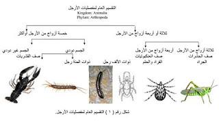 الحشرات الطبية والبيطرية عملىpdf