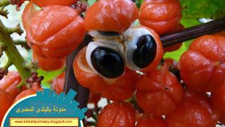 فوائد نبات الغرنا واهميته الصحيه والعلاجيه للكثير من الامراض