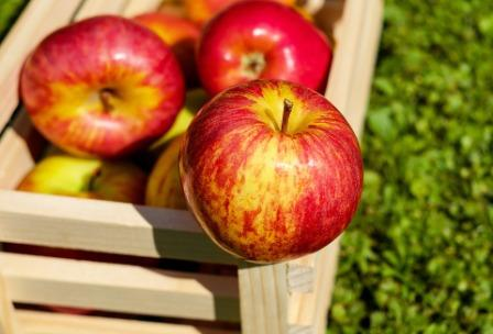 Diet Buah Apel Menurunkan Berat Badan 3Kg dalam 5 hari
