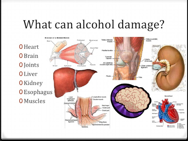 Here Is What Happens To Each Organ When You Consume Alcohol