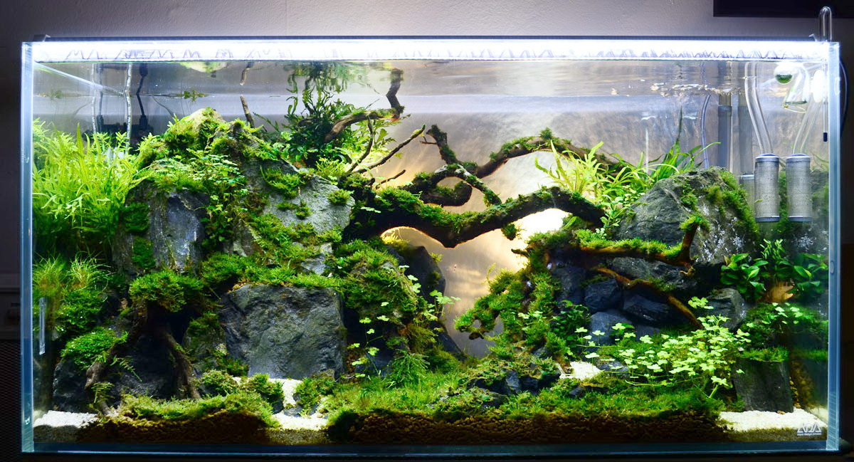 770 Gambar Aquascape Desain Kayu HD Paling Keren Download Gratis