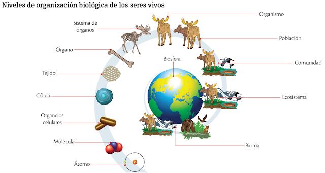 Los niveles de organización de los seres vivos