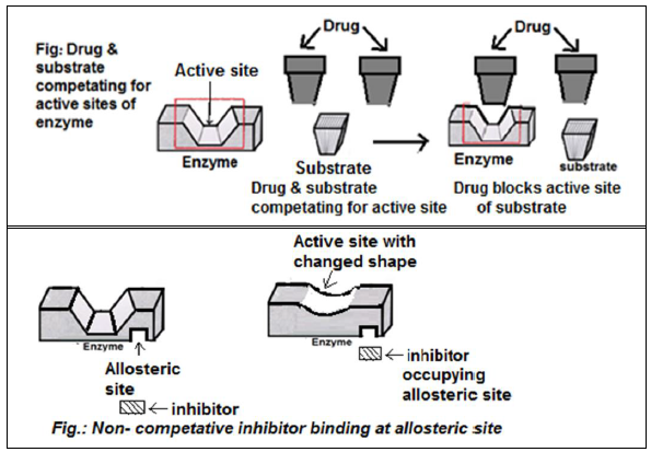 Action Of Drugs   Drug-enzyme Interaction
