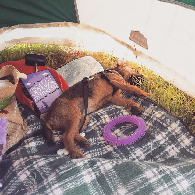 dog asleep in a tent