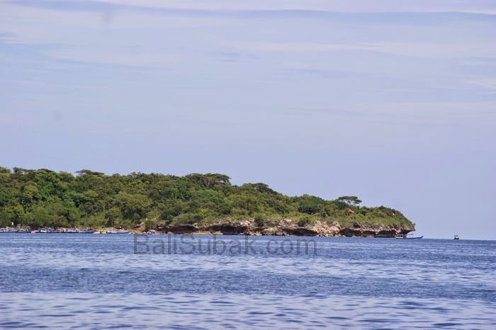 Menjangan Island, the best wall diving in Bali