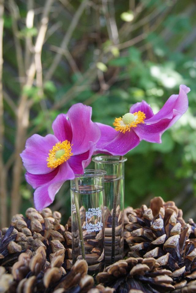 Gesteck mit Kiefernzapfen Glasröhrchen und Blumen