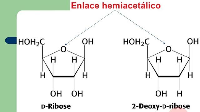 Enlace hemiacetalico y biologia