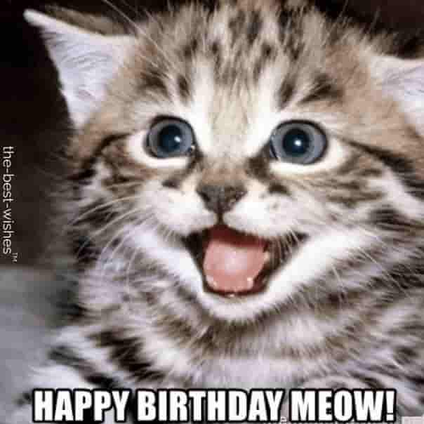 cute cat animals happy birthday