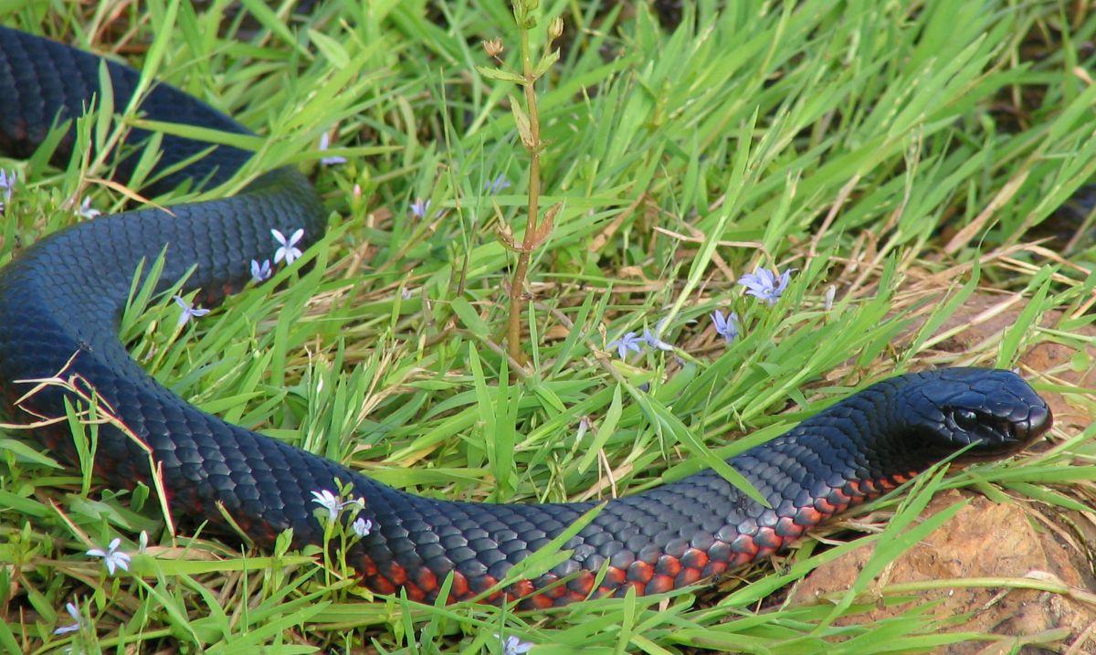 Watch: Retired zoo director hand feeds wild water snake ... |Snake Like Water Animals