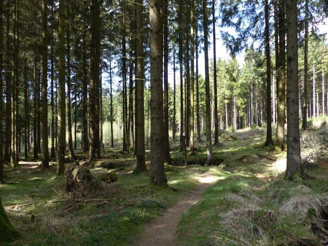 Hunsrück Urlaub Wanderurlaub mit Hund Ostern Traumschleifen Saar-Hunsrück-Steig Trauntal-Höhenweg