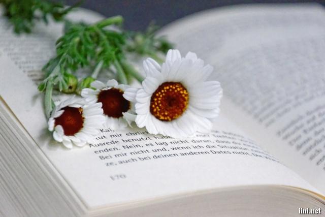 những bông hoa trắng xinh xắn bên sách