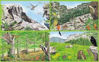 Desarrollo sustentable unidad i ecologia y medio ambiente for Medio en el que habitan los arboles