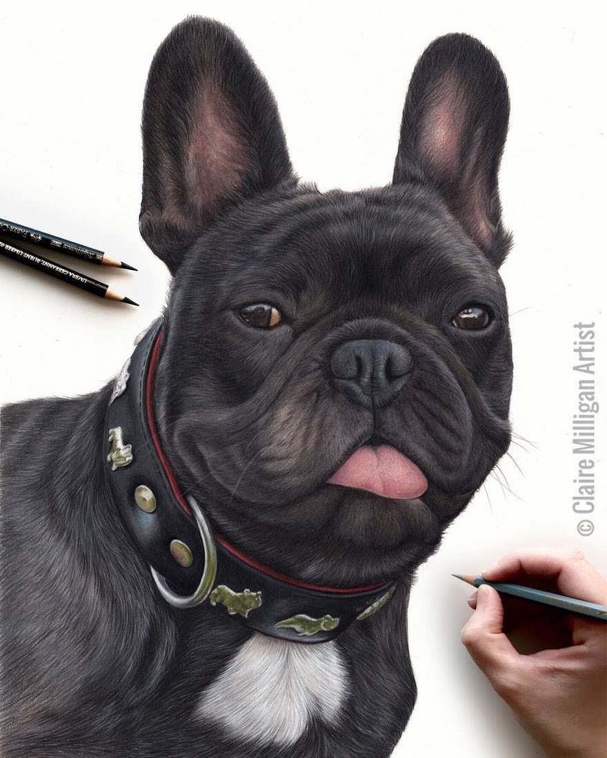 06-French-Bulldog-Frenchie-Claire-Milligan-Pet-Portraits-and-Wildlife-Art-www-designstack-co