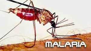 Mencegah Terjangkit Malaria Saat Liburan