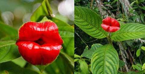 Menakjubkan! Beginilah Uniknya Bunga Yang Berbentuk Hewan