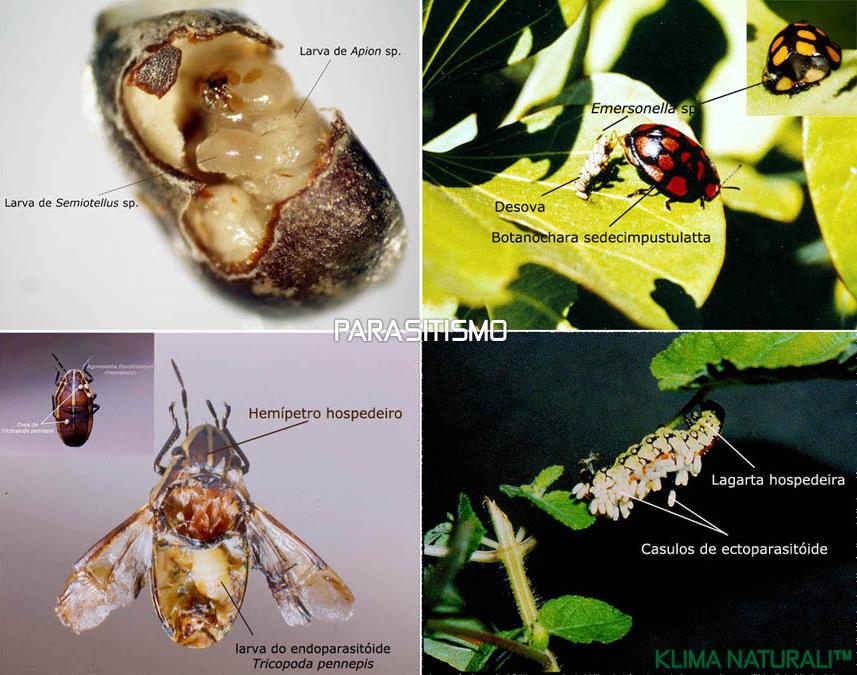Parasitismo | Relações Ecológicas Entre os Seres Vivos