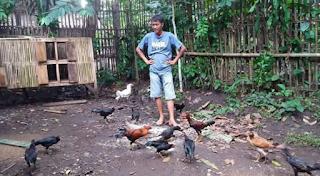 Seperti kita ketahui bahwa dalam beternak ayam kampung mempunyai banyak laba diantara Kabar Terbaru- SISTEM PETERNAKAN AYAM KAMPUNG