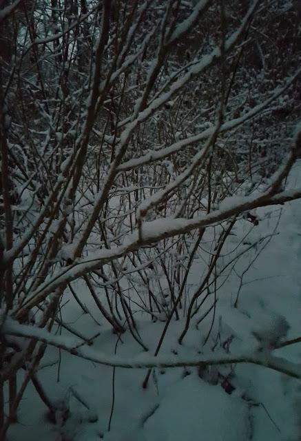 So schön leuchtet der Schnee im bläulichen Abendlicht
