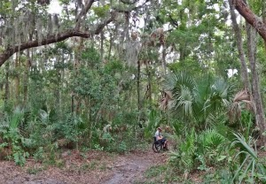 Mückenschutz Florida