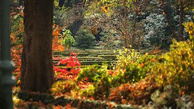 Fascinado con el Real Jardín Botánico de Madrid