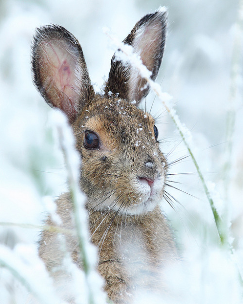 Beautiful winter scene with bunny rabbit in snow