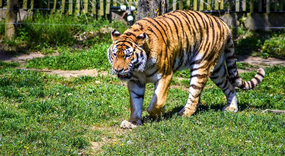 Pelestarian Hewan Dan Tumbuhan Cara Melestarikan Hewan Dan Tumbuhan Langka Di Indonesia Aftanalisis