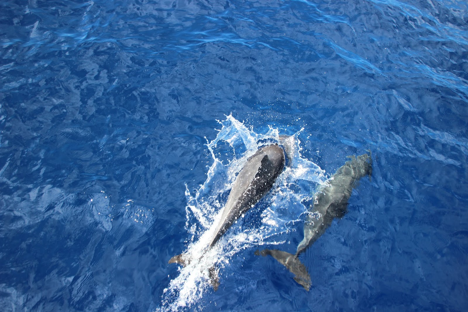two dolphins just entering the water after a jump