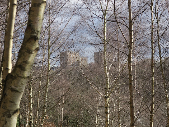 Looking from Shroggs park in Halifax through a mist of silver birches to tall flats on the other side of a 'ravine'.