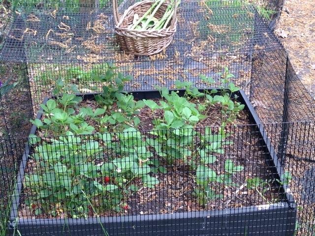 Sustainable Possibilities Gardening With Deer Groundhogs