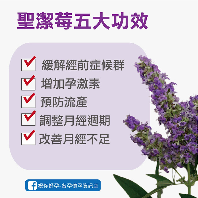 聖潔莓除了調經外 也能增加孕激素,是備孕期的營養聖品