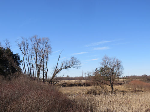 sunshine on brown March wetland