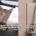 Apa Dosa Kucing Ini ,Di Sumpit Sebegini Rupa?