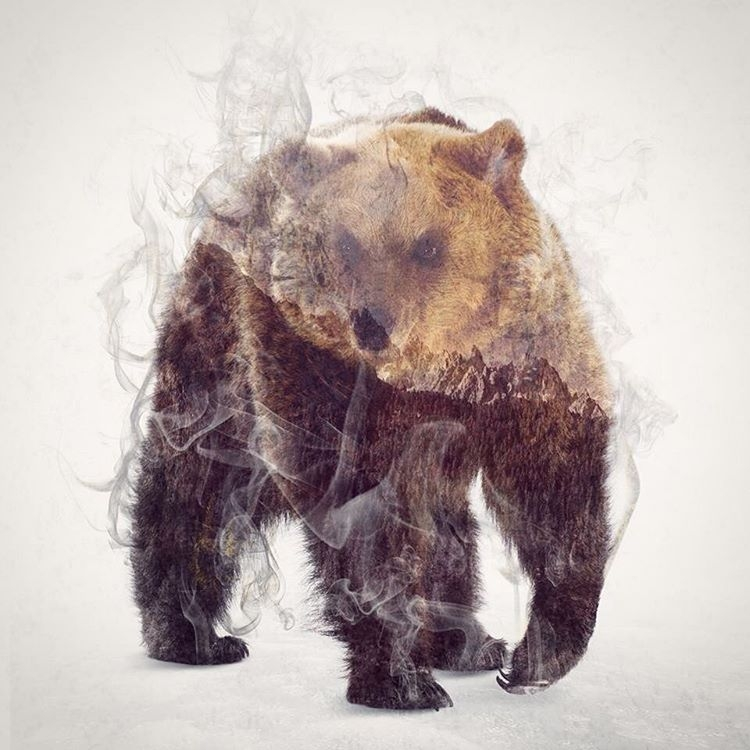 07-Bear-Daniel-Taylor-Ghostly-Animals-in-Manipulated-Photographs-www-designstack-co