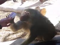 Reaksi Babon Lihat Trik Sulap Ini Sungguh Spektakuler