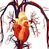Blood Circulation And Its Importance For Healthy Living