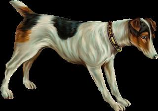 Cachorros Imagens PNG Fundo Transparente