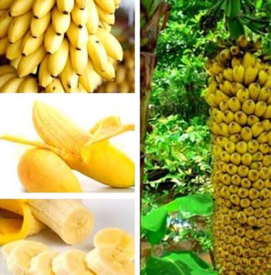 https://www.banggood.com/Egrow-30-Pcs-Dwarf-Banana-Seeds-Bonsai-Tree-Tropical-Fruit-Seeds-Balcony-Flower-for-Home-Plants-p-1259529.html?VU10125254322014040A
