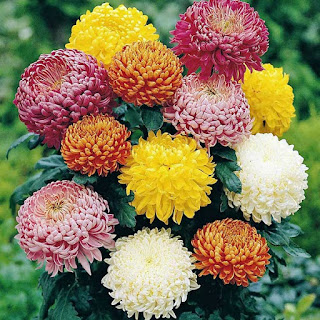 Menjual Berbagai Karangan Bunga Di Bekasi Hubungi call/wa 08995524423 || 089525498596 || 082262222989