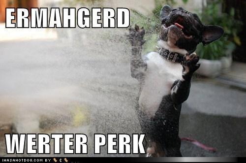 Ermahgerd Dog ERMAHGERD