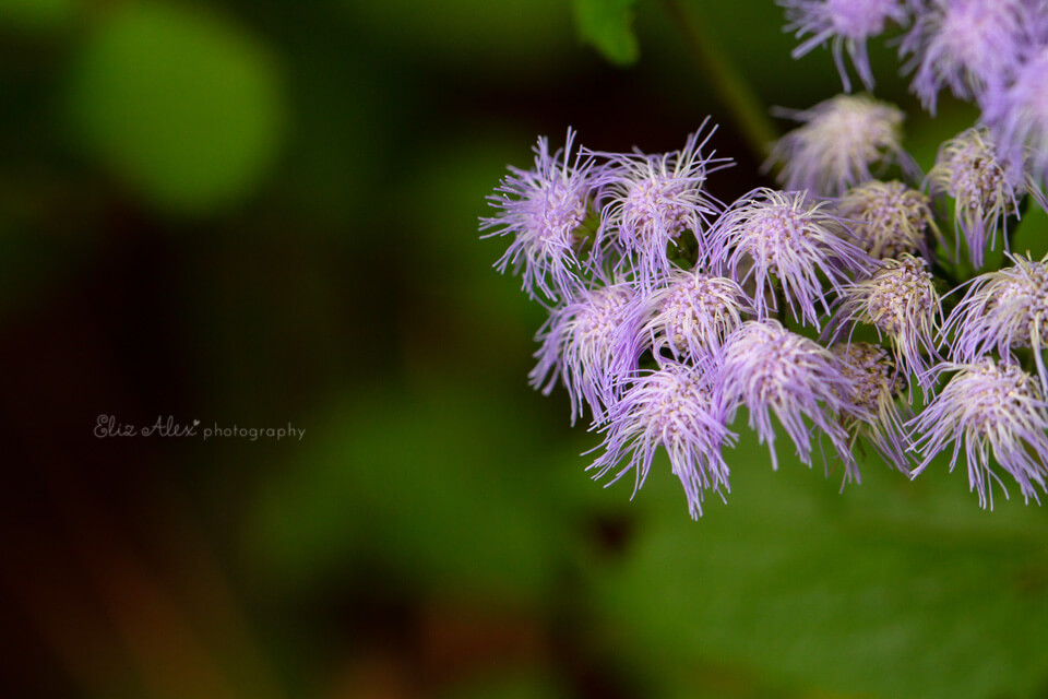 woodlands photographer