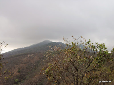 Cima de la Sierra el Travesaño desde la Sierra del Tecuán Ixtlahuacán de los Membrillos