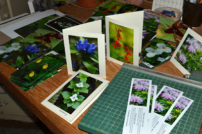 colourful notecards native plants desk