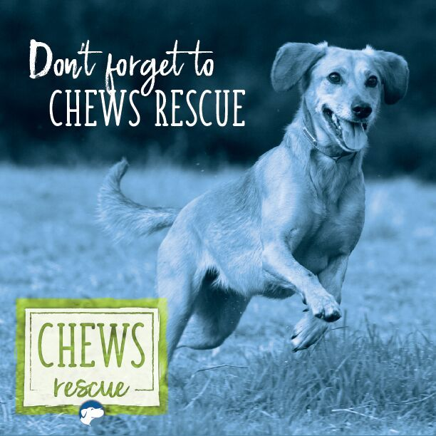 Barkworthies is covering the adoption fees for dogs at Chicago Canine Rescue and One Tail at a Time as part of their  #ChewsRescue initiative for Adopt A Shelter Pet Day