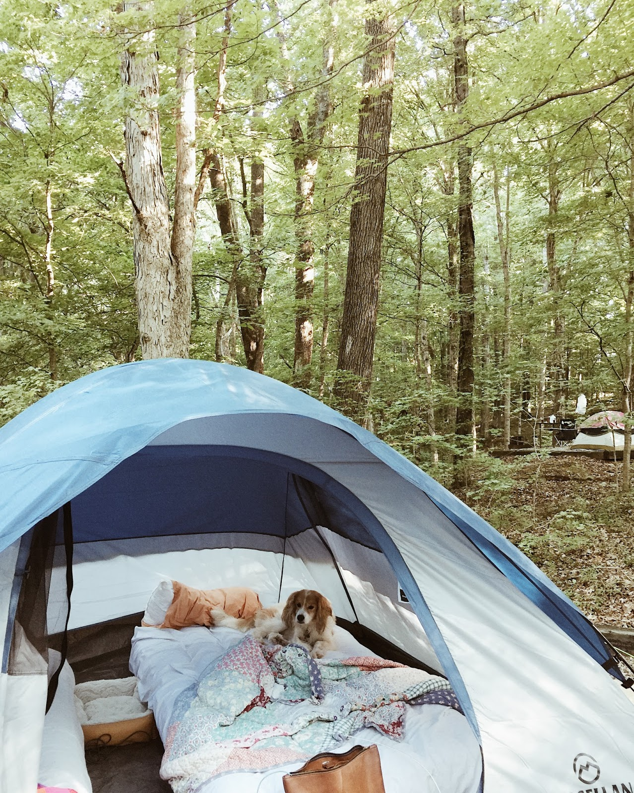 Camping At Barren River Lake With Three Dogs