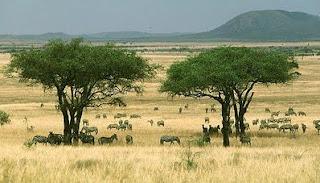 Pengertian Keseimbangan Lingkungan Ekosistem