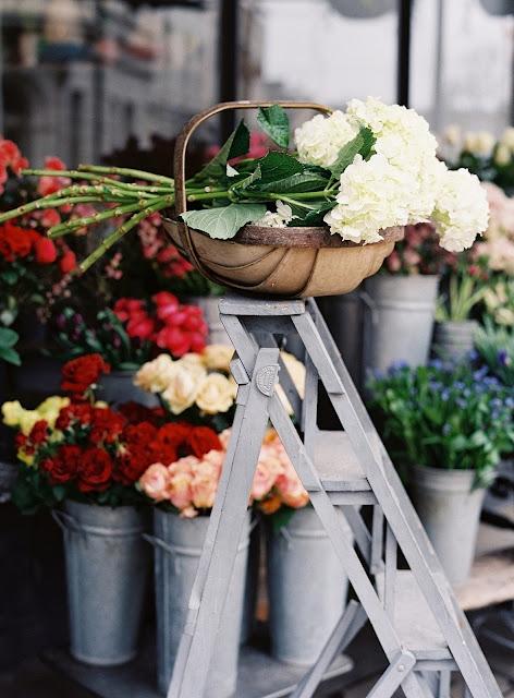 Flowers-Roses-photo-vanessa-jackman