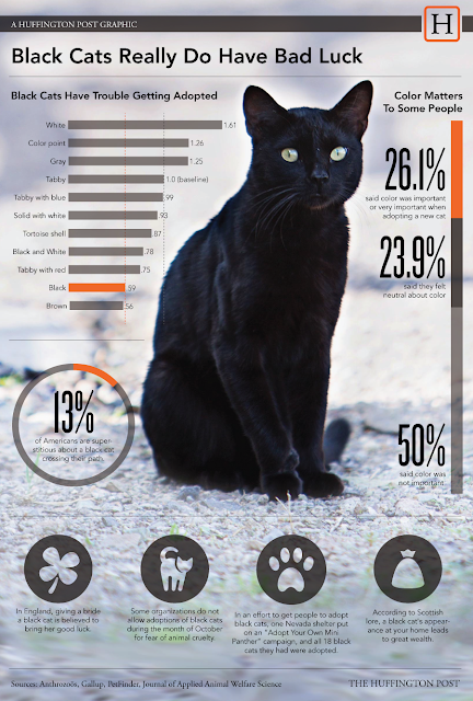 The reasons to adopt a black cat