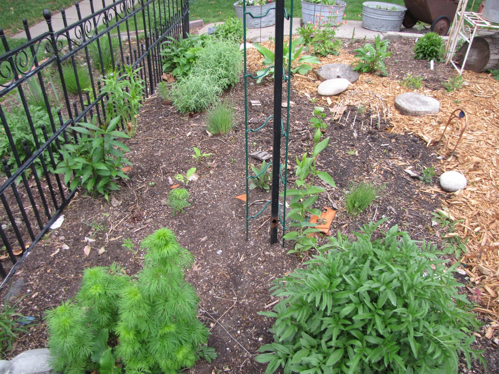 A Corner Garden: Front Yard, Area Where Tree used to be