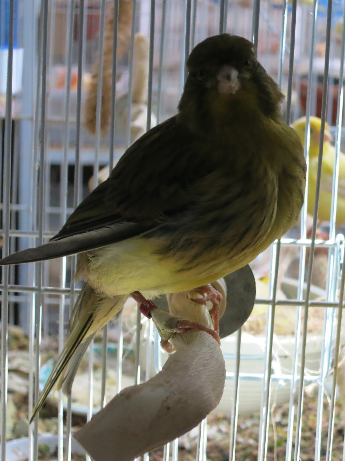 Canary Tales: August 2015