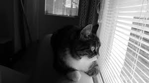 Cat Separation Anxiety: What Are The Causes, Signs, Treatment?